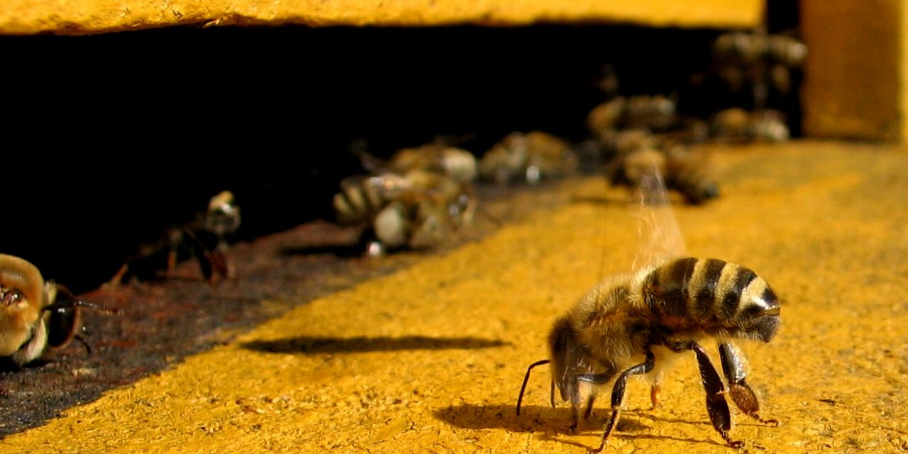 United Nations Issues Global Warning! Mass Die-Off Of Bees Is Causing Food Production Decline—Action Must Be Taken Now Or Else…