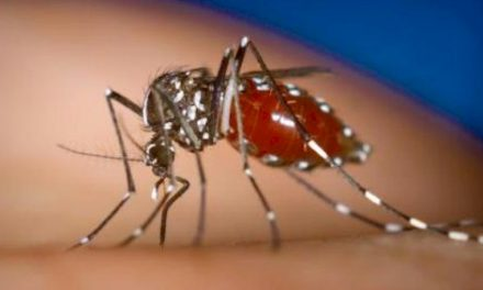 First California Now Florida—Thousands Of Lab-Monster Mosquitoes Released—What It Means and More…
