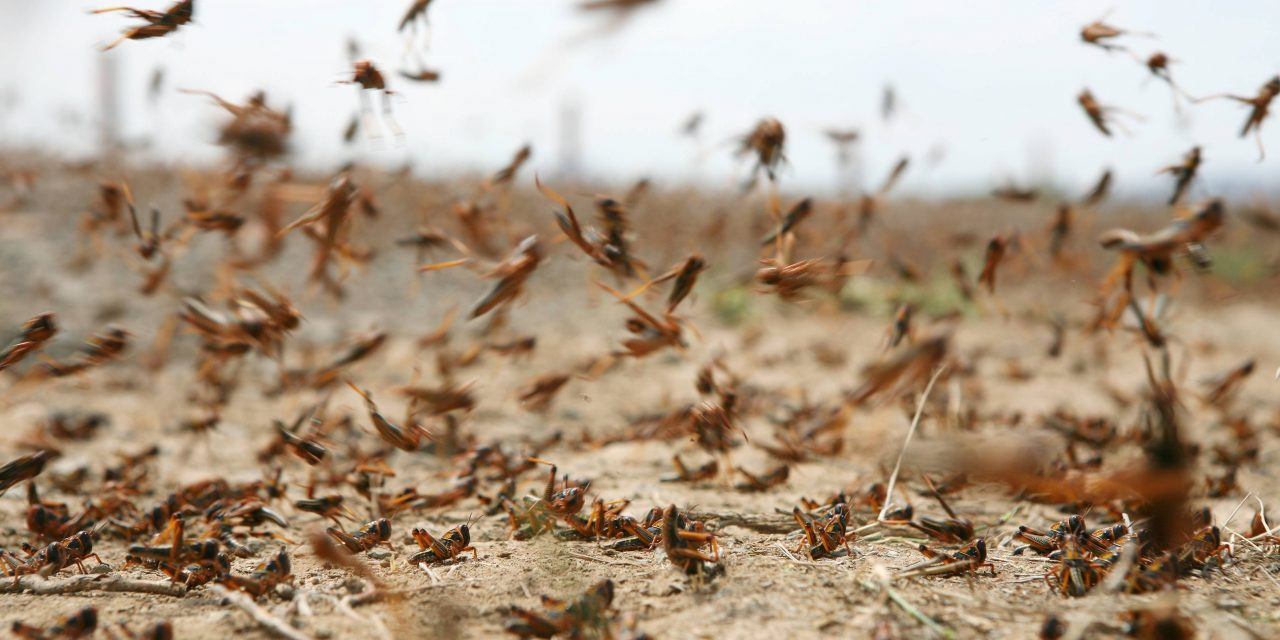 What In The World Did DARPA Just Do!! Revelation Beast Locusts Rising In America!!